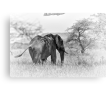 """Pass by of a old Giant"" (B&W) Canvas Print"