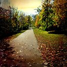 Nature Trail © by Dawn M. Becker