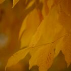 Mellow Yellow by Joanne  Bradley