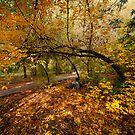 Autumn Tree by Svetlana Sewell