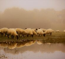 Sheep in the mist by Ian Hufton