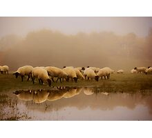 Sheep in the mist Photographic Print