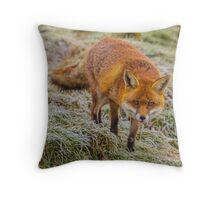 Frosty fox 2 Throw Pillow