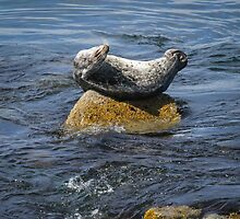 Harbor Seal Yoga by littleoldhag