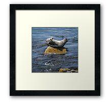 Harbor Seal Yoga Framed Print