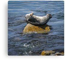 Harbor Seal Yoga Canvas Print
