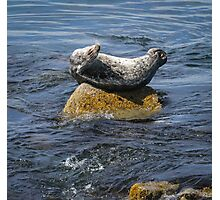 Harbor Seal Yoga Photographic Print