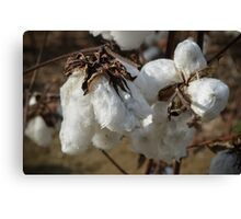 Tennessee Cotton Canvas Print