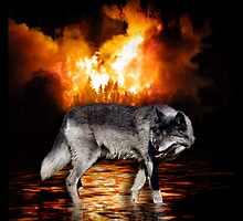 Grey Wolf Fire Flames Survivor iPhone Case by Val  Brackenridge