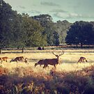 Richmond Park, London by Toby Pocock