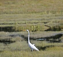 Great Egret by lumiwa