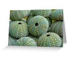 Sea Urchin Shells Greeting Card