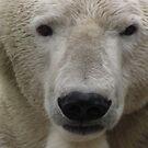 Polar Bear Closeup by Nematoad1998