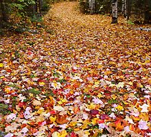 Autumn Trails by EvanWilliams