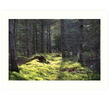 The Forest Floor Art Print
