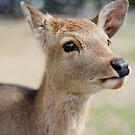 Cute Deer by Aneurysm