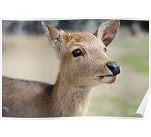 Cute Deer Poster