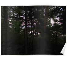 Forest Impressionism  Poster