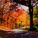 Autumn Drive by shutterbug2010