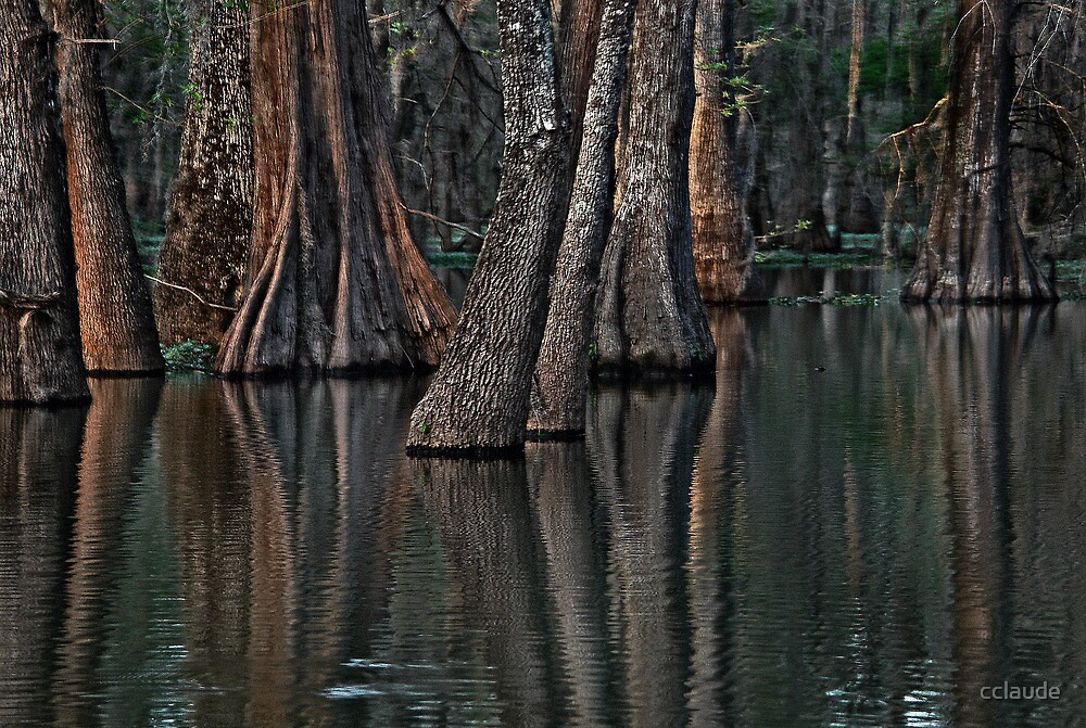 Darkness at the Edge of the Bayou by cclaude