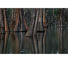 Darkness at the Edge of the Bayou Photographic Print