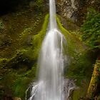 Marymere Falls by Chaney Swiney
