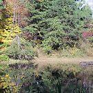 Jefferson Memorial Forest II, near Louisville, Kentucky by Richard J. Bartlett