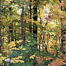 Jefferson Memorial Forest III, near Louisville, Kentucky  by Richard J. Bartlett