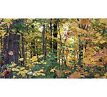 Jefferson Memorial Forest III, near Louisville, Kentucky  Photographic Print