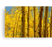 Bathed In The Gold Of Fall Canvas Print
