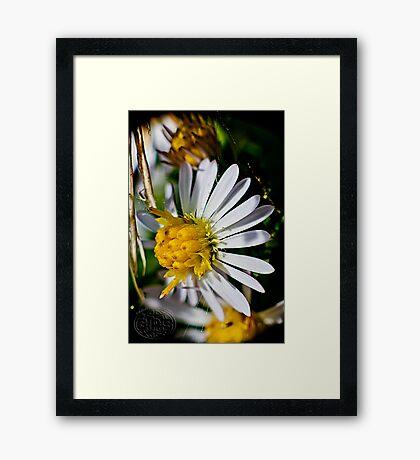 flowers at summer's end Framed Print