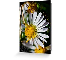 flowers at summer's end Greeting Card