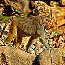 Monkey Business . by HanselASolera