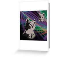Cat on We Have Lasers Greeting Card