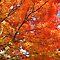 Blazing Fall Colors