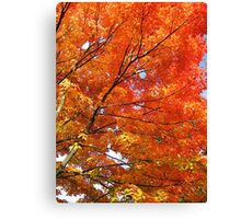 Looking Up Into A Fire Of Leaves Canvas Print