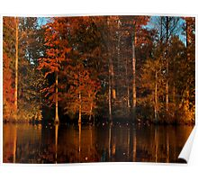 Late afternoon lake leaf litter Poster