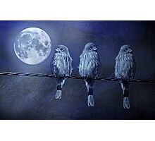 Moonlight Roost Photographic Print
