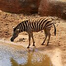 Dirty Zebra by Debbie-anne