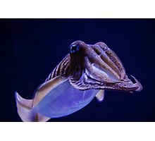 Solo Cuttle Photographic Print