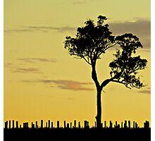 Sunset Vineyard 1 Photographic Print