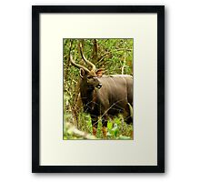 Forest Majestic Framed Print