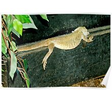 Lounge Lizzard Poster