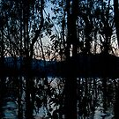 Eildon Morning by Alex Evans