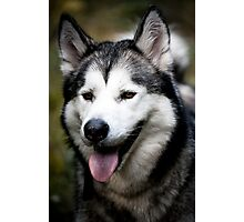 Handsome pooch Photographic Print