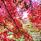 Candian Maples - Orton Effect by Colin  Williams Photography