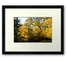 Natures Paint Brush Framed Print