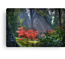 The Burning Bush Canvas Print