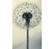 tiny flower with a big heart Photographic Print