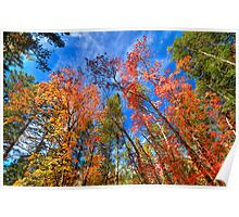 The Colors of Cloudcroft, New Mexico Poster